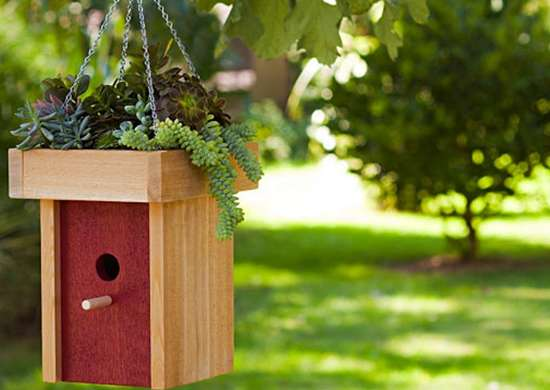 DIY Bird Feeder and Planter