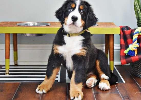 Wood-dog-feeding-station
