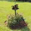 Backyard Planting