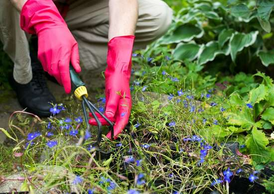 Dig up and divide perennials