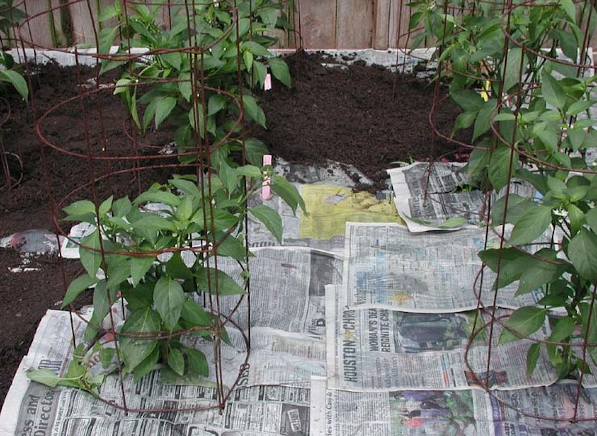 Newspaper-mulch