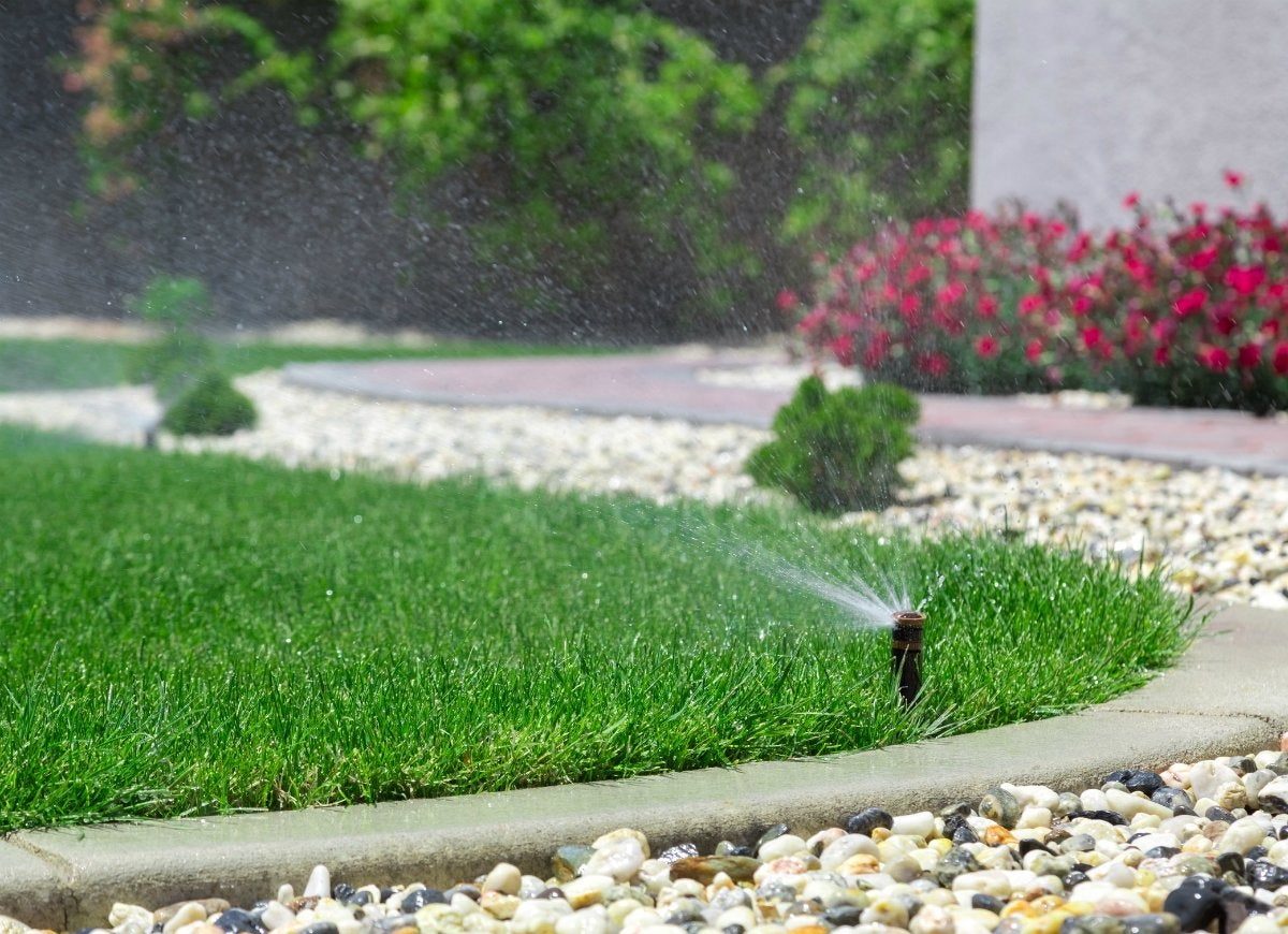 Overwatering the lawn