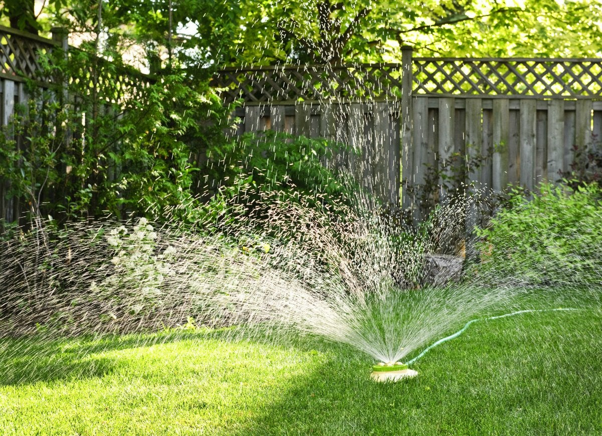 Watering-the-lawn-at-the-wrong-time