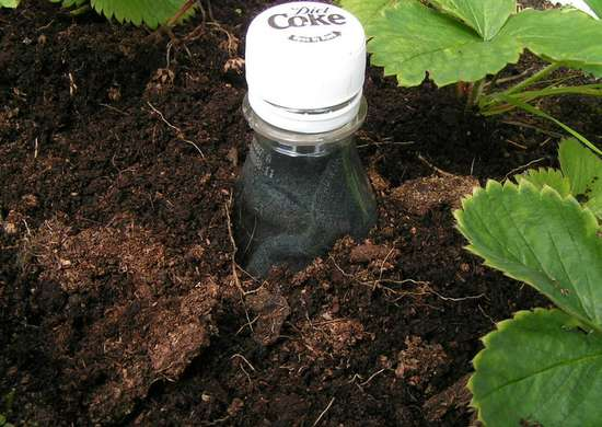 Save water in the garden with a soda bottle