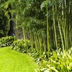 Bamboo Landscaping