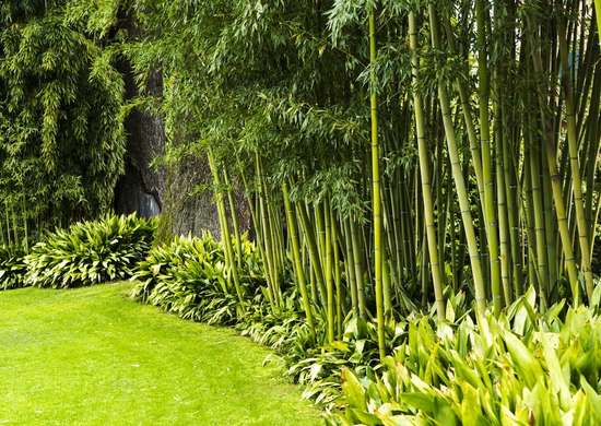bamboo landscaping backyard privacy 10 best plants to grow bob