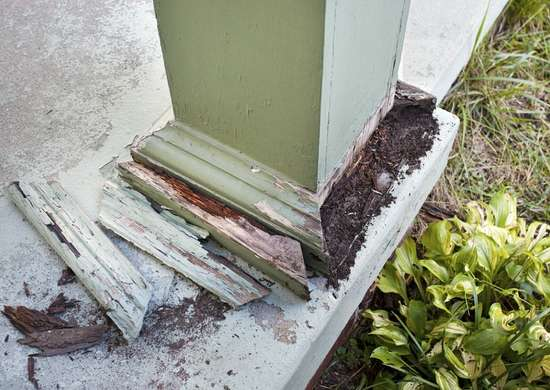 Termite-and-pest-damage