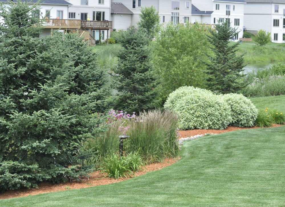 Trouble free trees low maintenance landscaping 17 for Best low maintenance landscaping