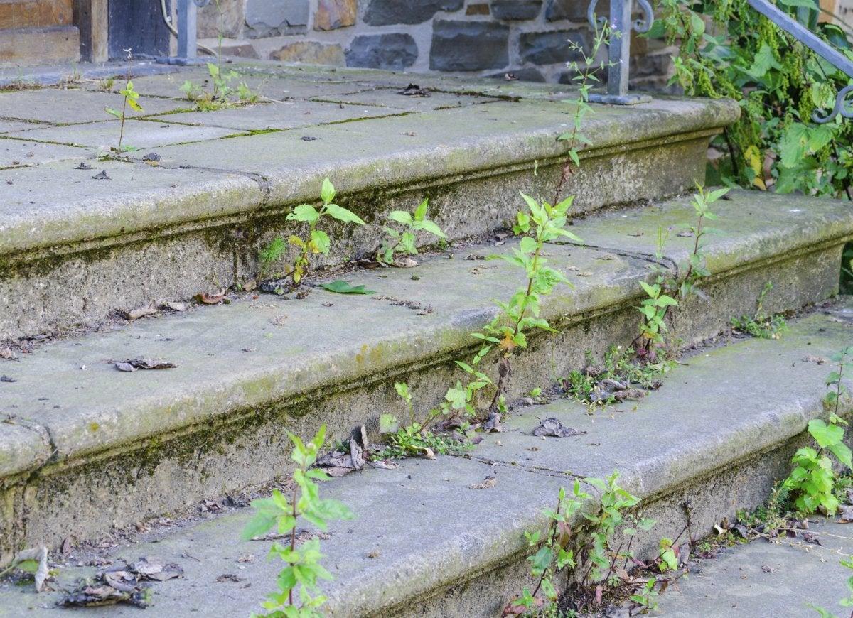 Weeds-overgrown-lawn