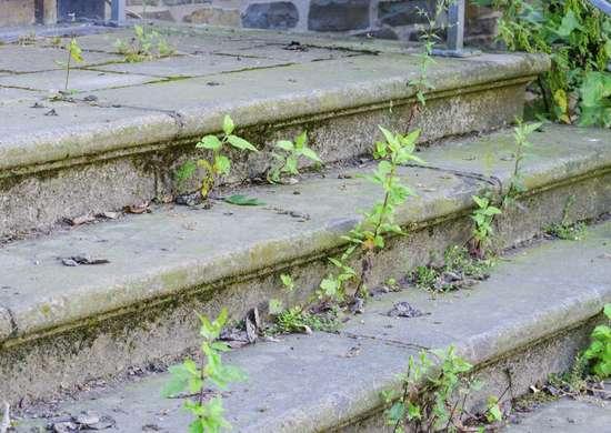 Weeds overgrown lawn