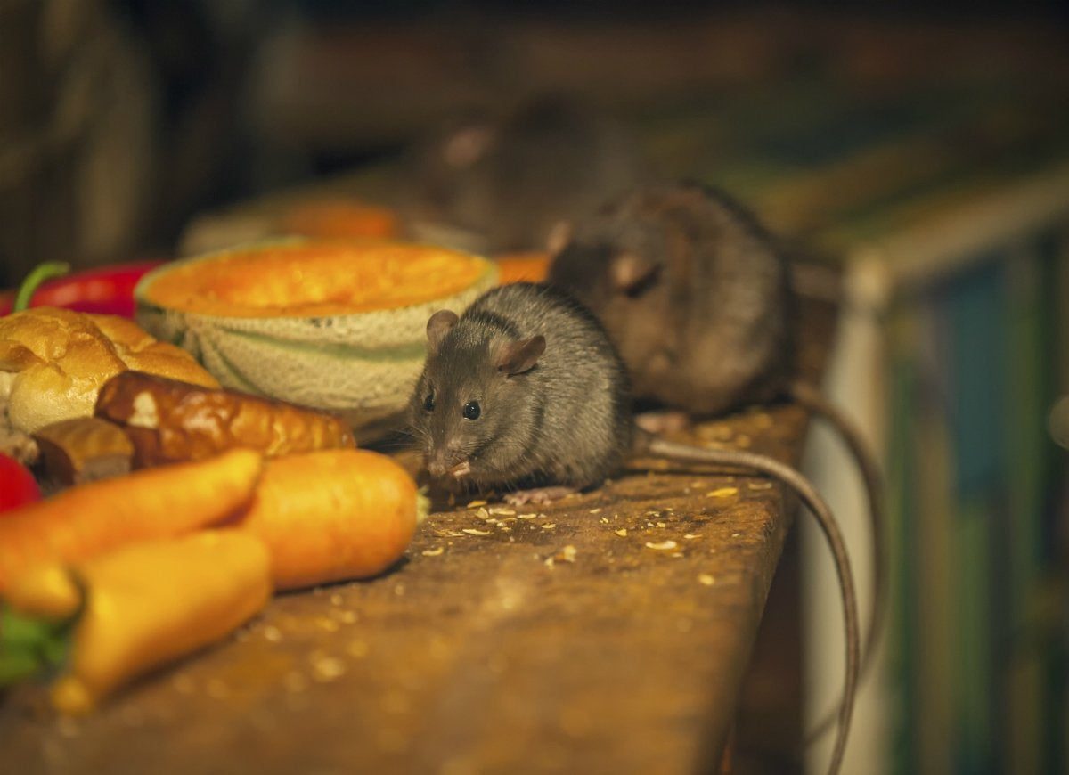 Mice in food