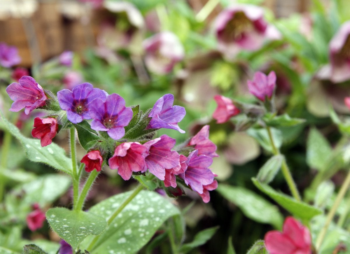 Shade Plants 20 Plants That Dont Need Sun Bob Vila