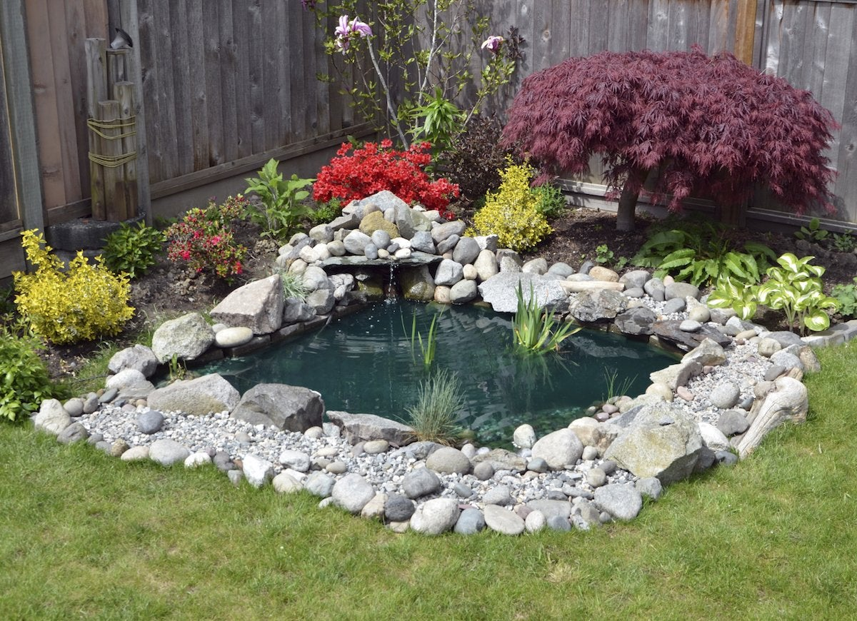 Backyard-garden-pond