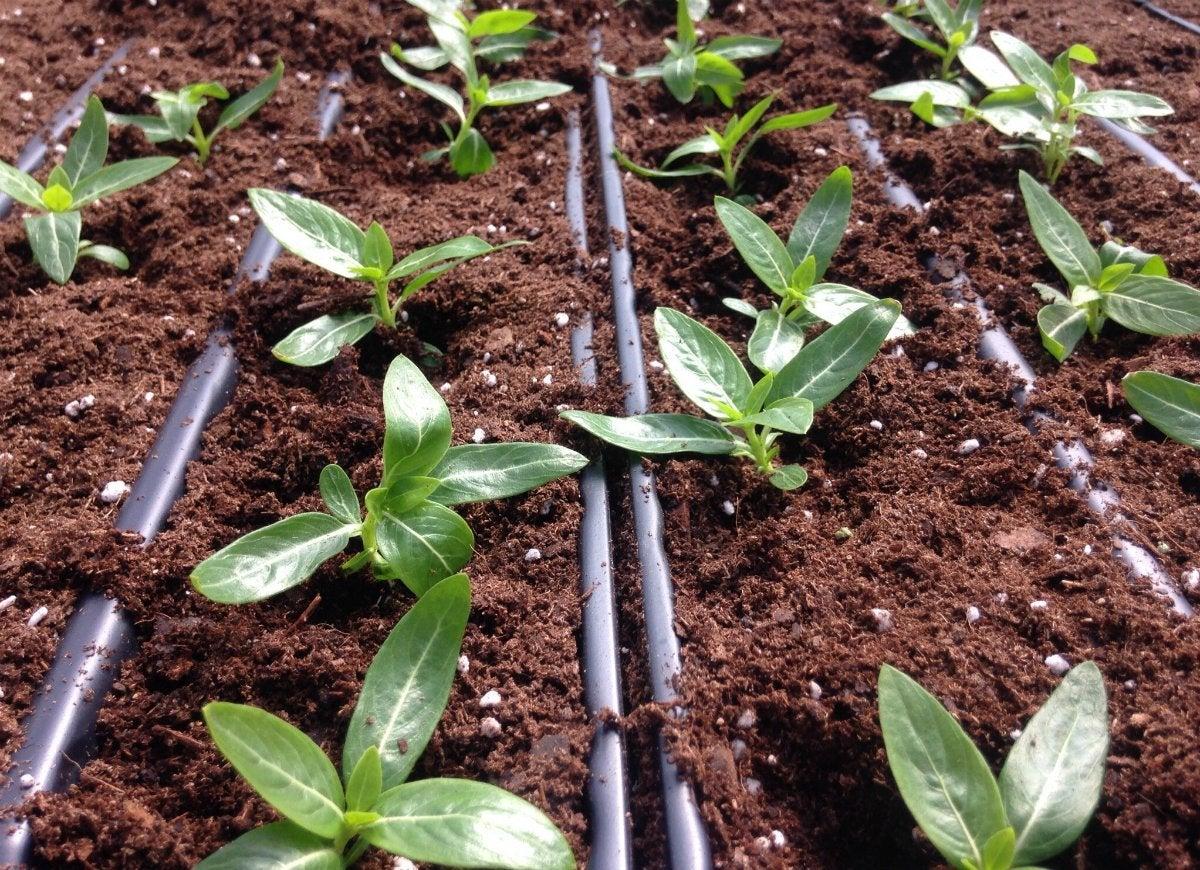 Perlite soil moisture