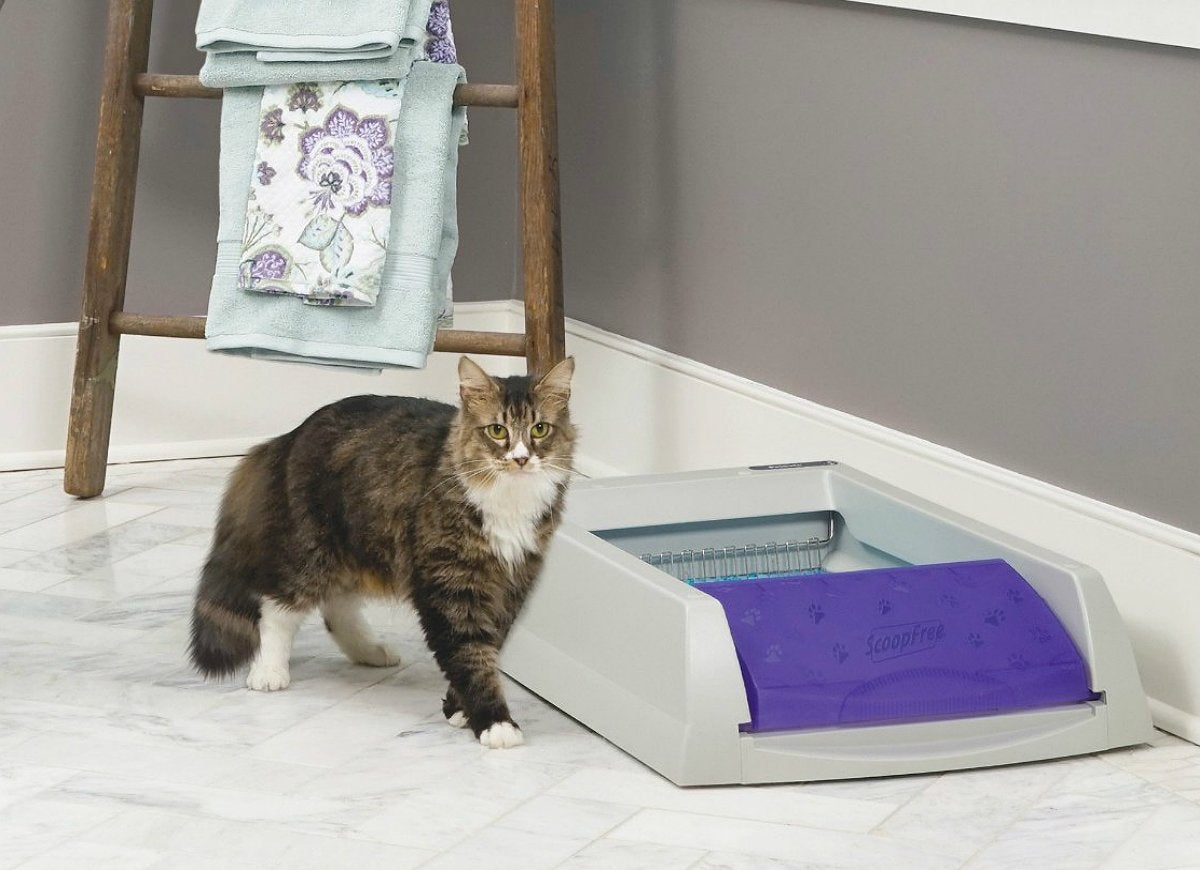 Self Cleaning Litter Box Australia Spinner Quick