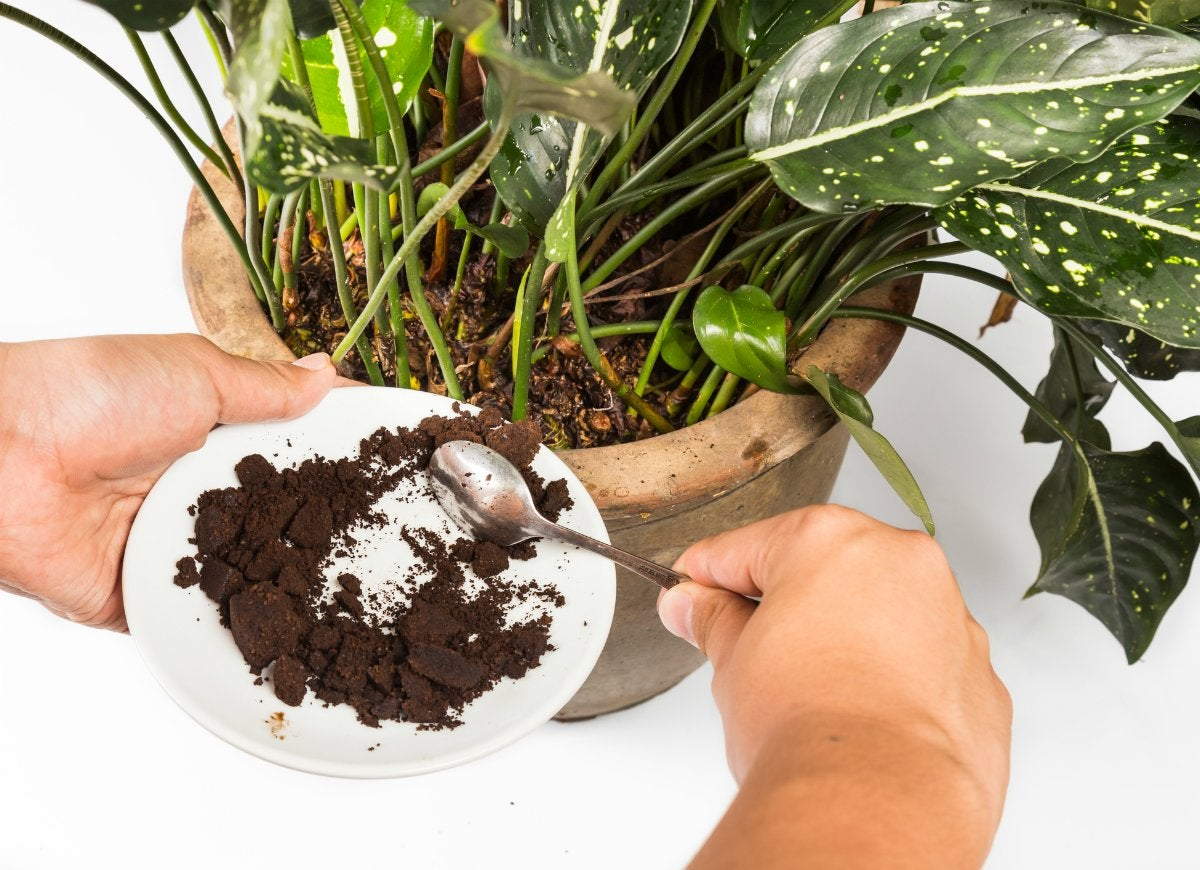 Fertilize-plants-with-coffee-grounds