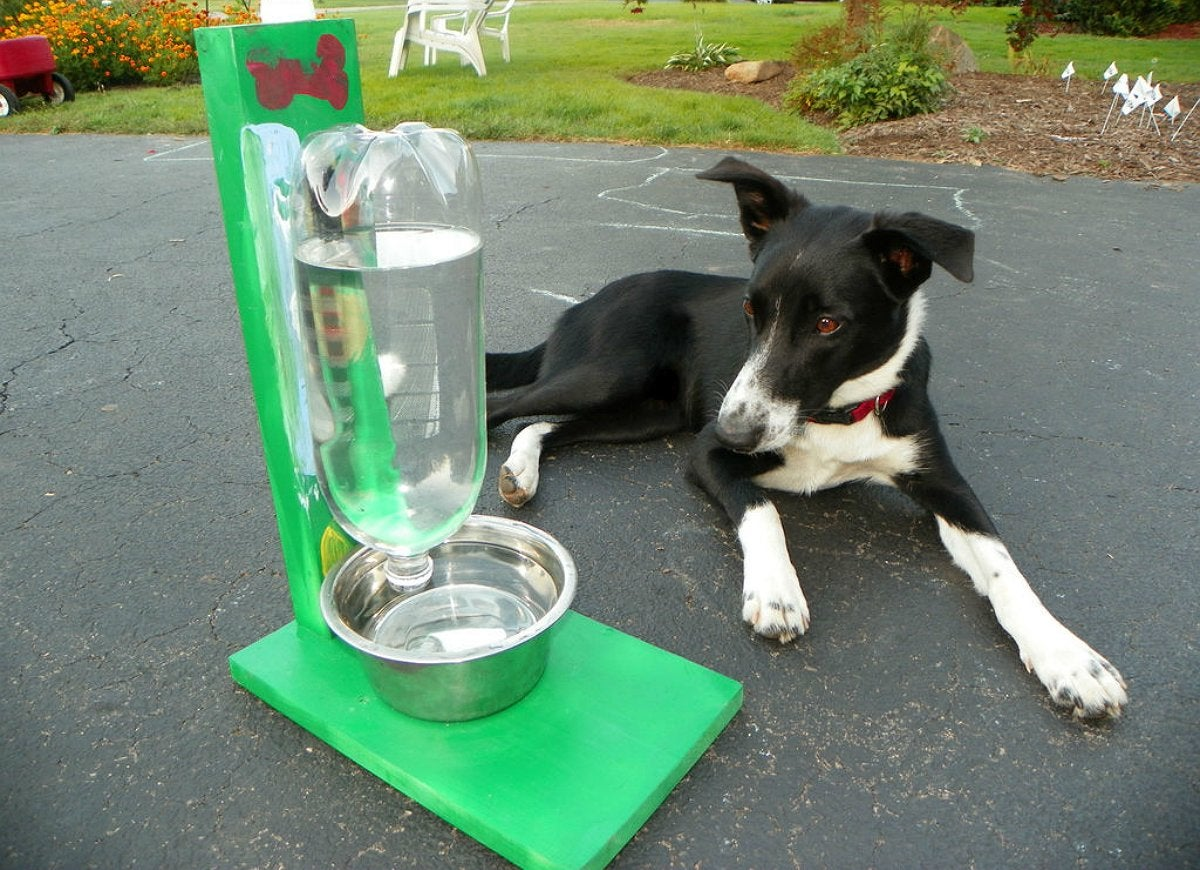 Diy automatic water bowl pets
