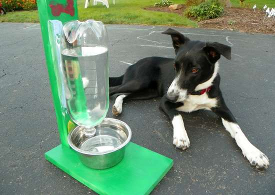 Diy automatic water bowl pets