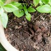 Fertilize with Coffee Grounds