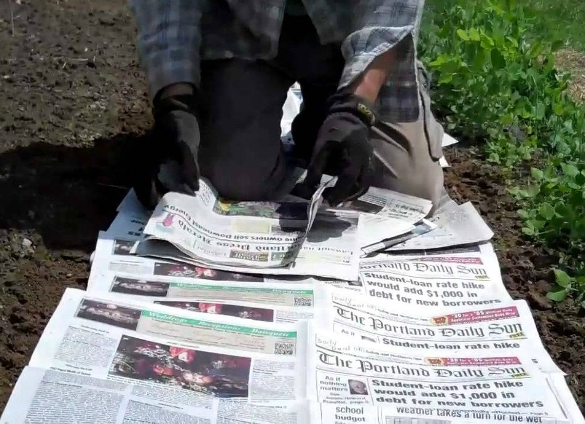Newspaper mulch