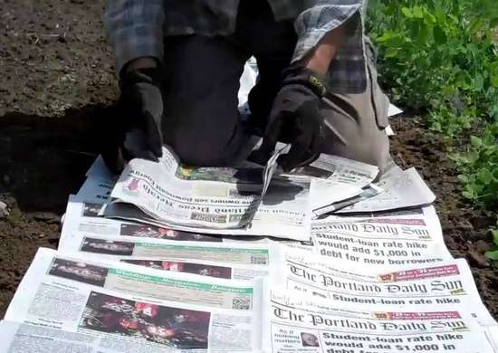 Mulch with Newspaper