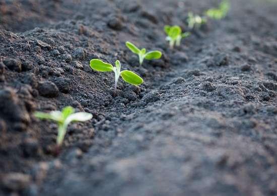 Protect seedlings