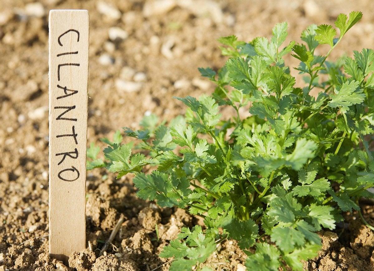 Diy garden marker plant label