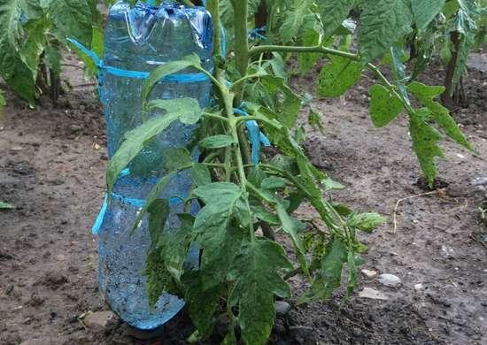 Soda bottle plant nanny