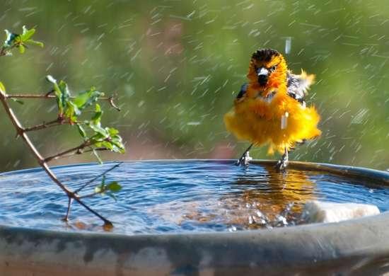 Add a Bird Bath