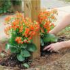 Plant a Mailbox Garden