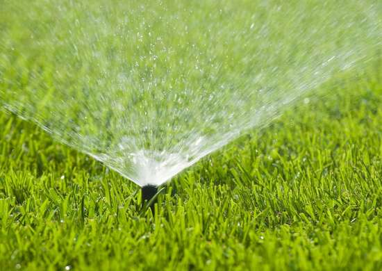Water the lawn