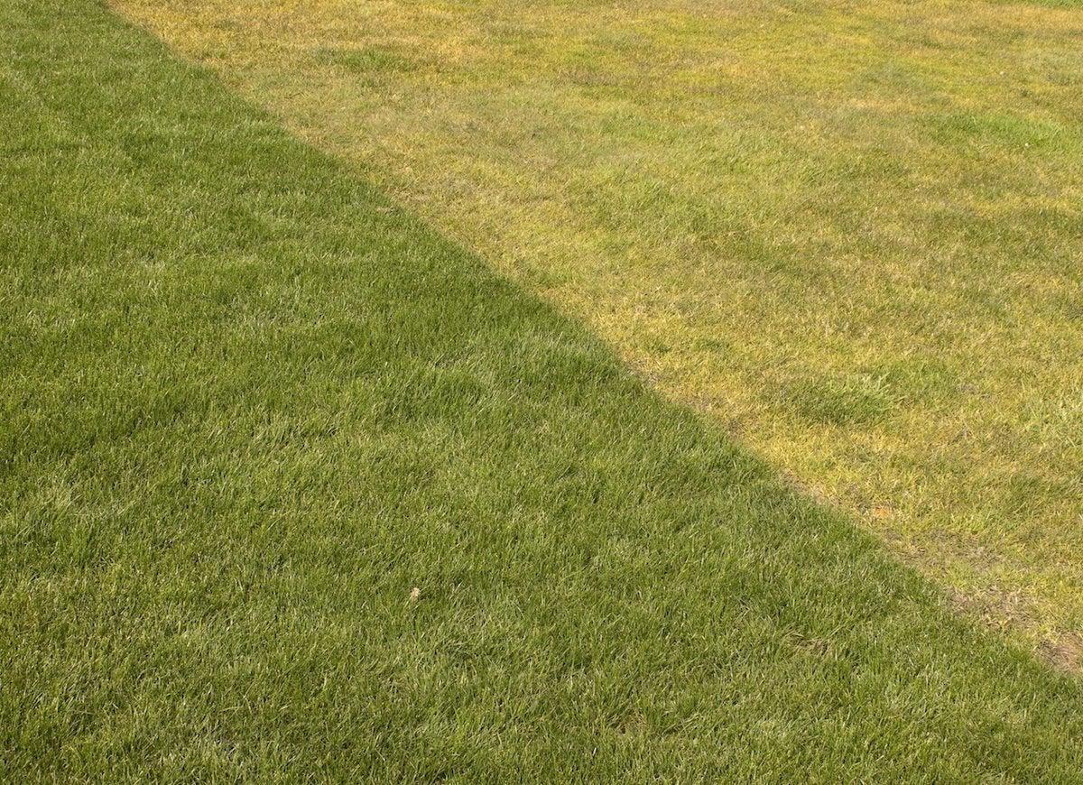 Fertilize a yellow lawn