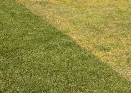 Fertilize_a_yellow_lawn