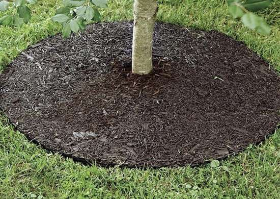 Permanent Mulch Tree Ring