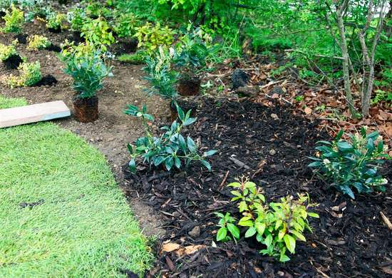 Mulch-in-garden