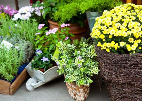 Shop for Plants in Fall Sales