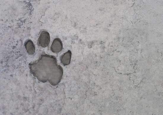 Pet friendly concrete flooring