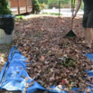 Rake Leaves Faster with a Tarp