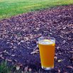 Fertilize Your Garden with Beer