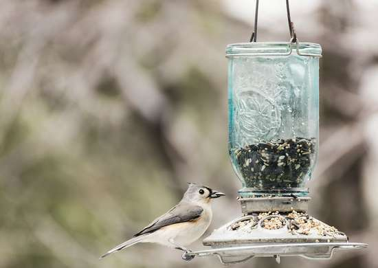 Clean bird feeder