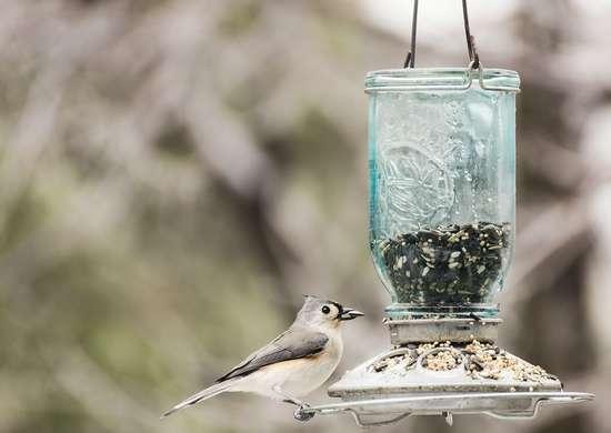 Clean Backyard Bird Feeders