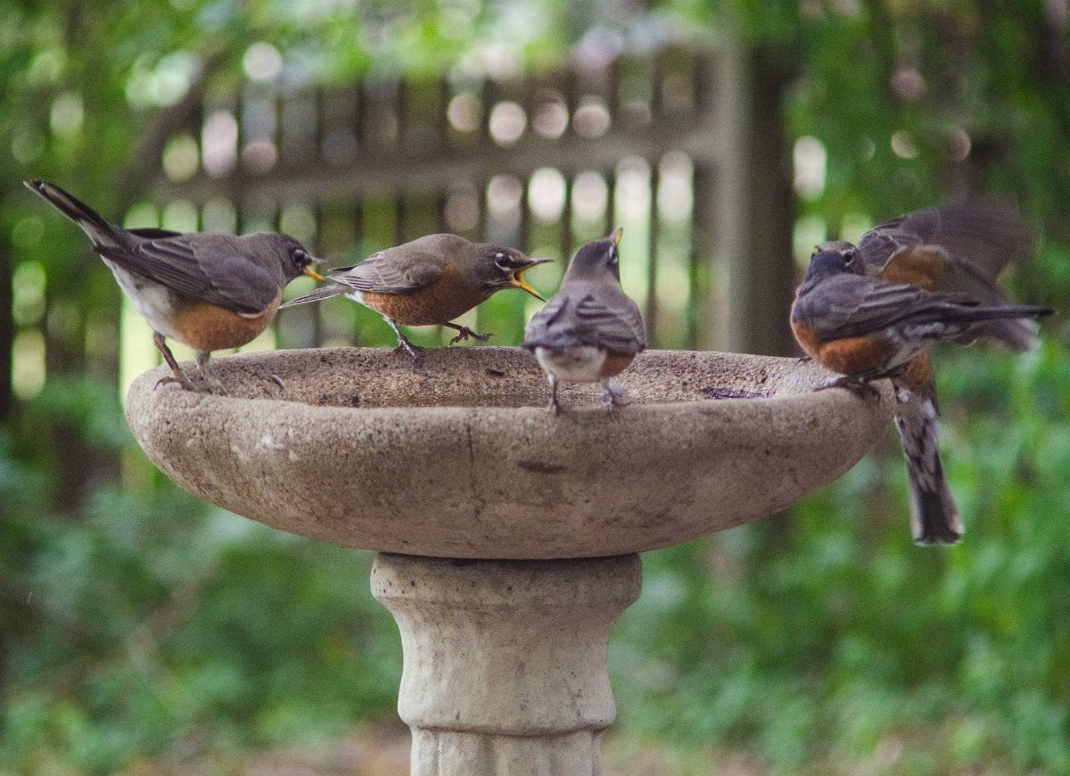 Add a garbage bag to bird bath