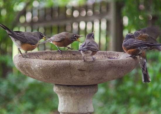 Bag Your Bird Bath