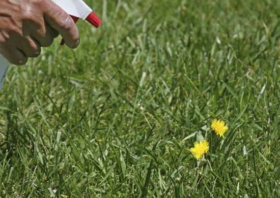 Kill Weeds with Kitchen Staples