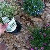 Switch Out Seasonal Plants