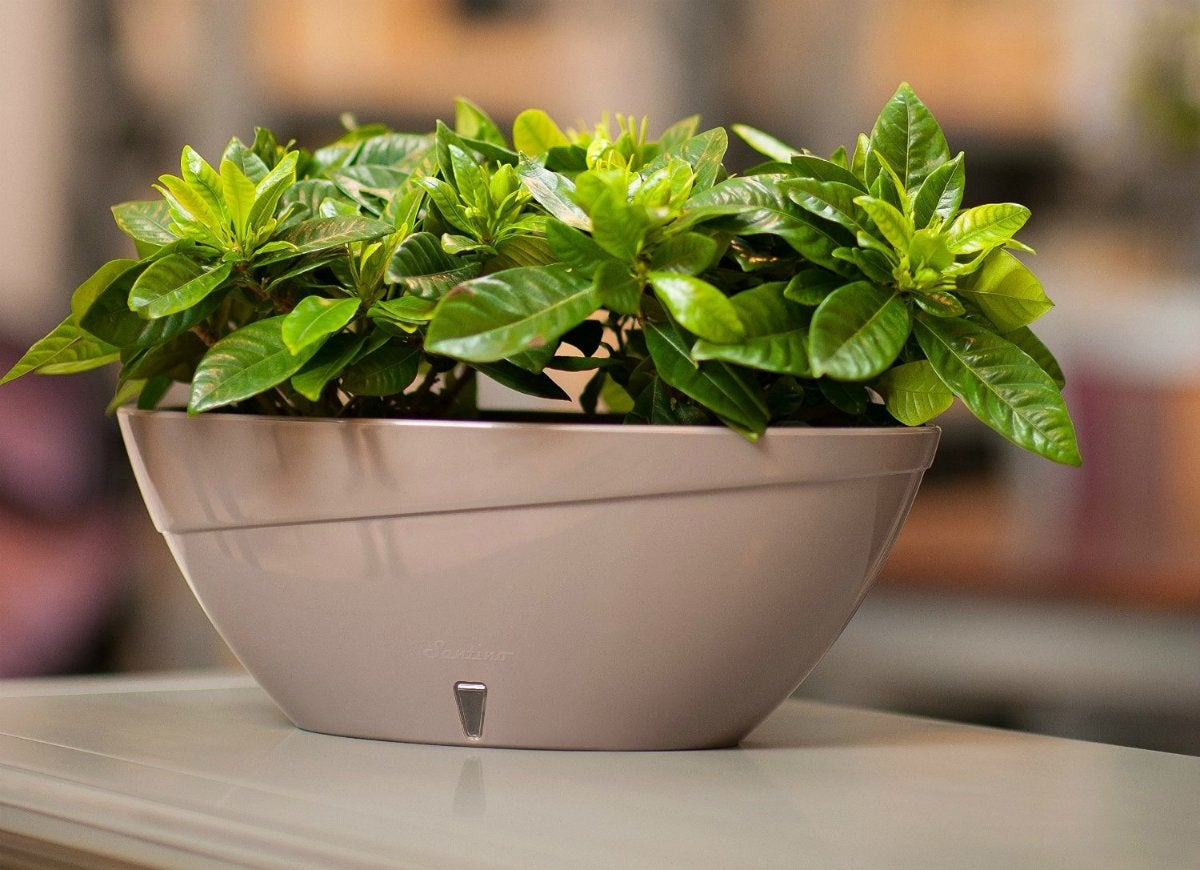 Santino self watering planter