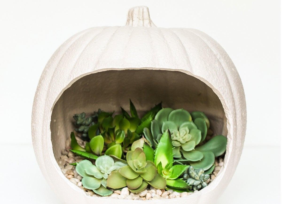 Pumpkin planter