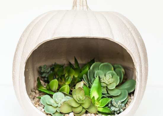 DIY Pumpkin Planter