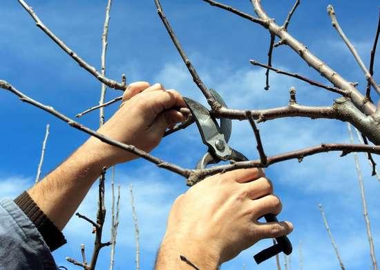 Prune-tree