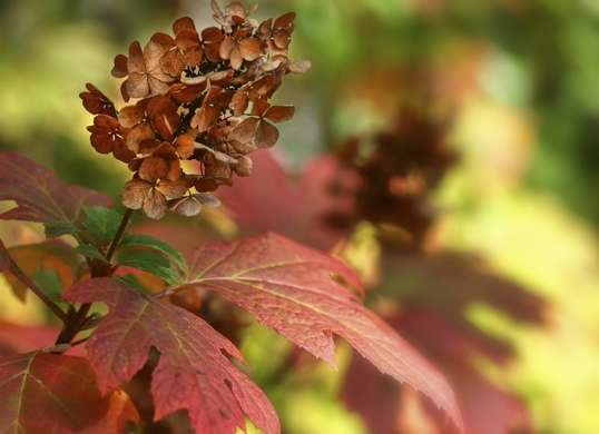 Fall Landscaping Ideas 30 Colorful Plants For Your Yard Bob Vila